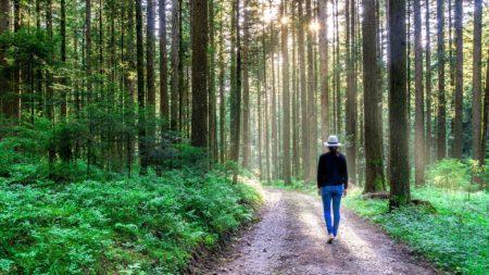 早歩き効果👟〜ウォーキング&散策を〜