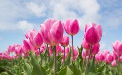 """心も体ものびやかに""""春の過ごし方"""""""